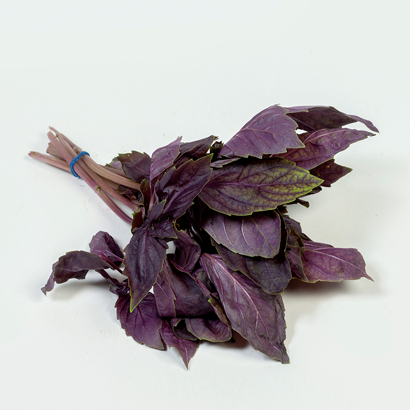 Basil Red » Alion » View our products at Alion