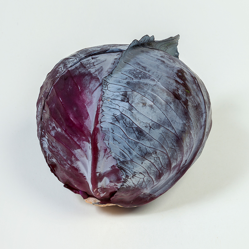 Cabbage Red » Alion » View our products at Alion