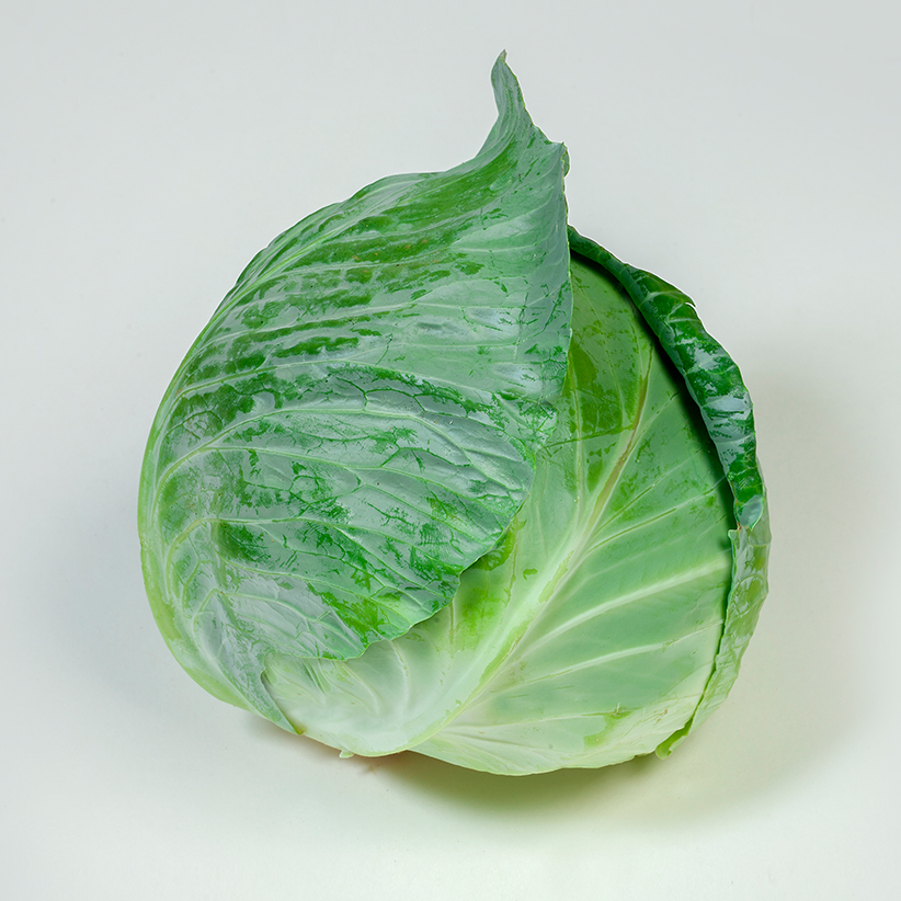 Cabbage White » Alion » View our products at Alion