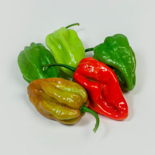 Hot Peppers » Alion » View our products at Alion