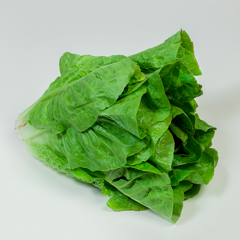 Lettuce Romaine » Alion » View our products at Alion