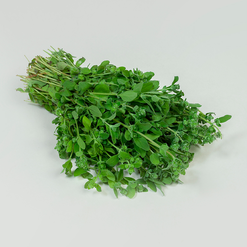 Marjoram » Alion » View our products at Alion
