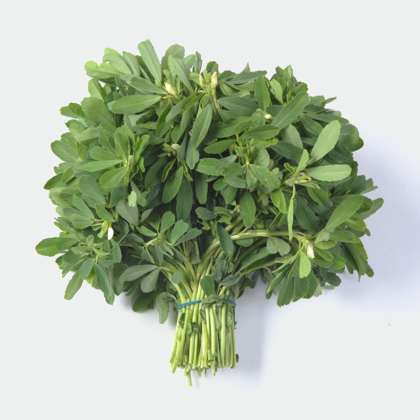 Fenugreek (Methi) » Alion » View our peoducts at Alion