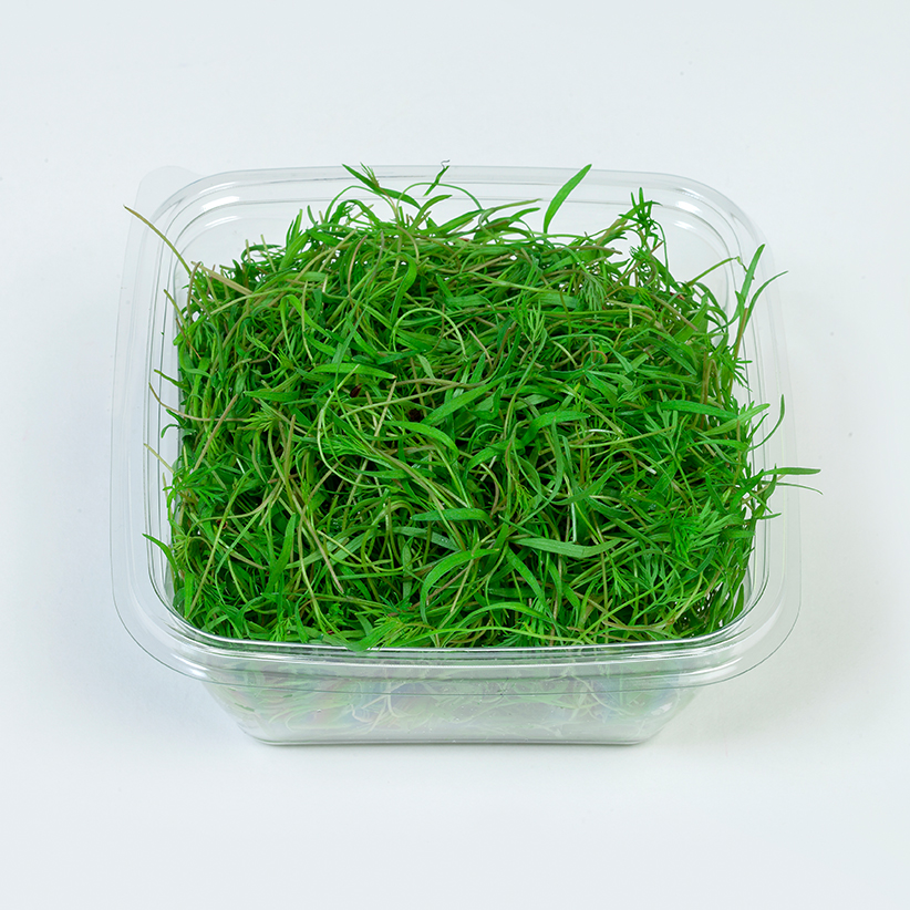 Micro Dill » Alion » View our products at Alion