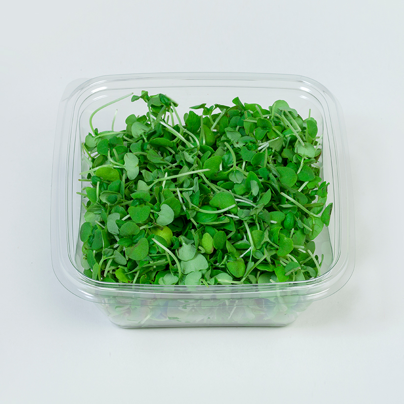 Micro Green Basil » Alion » View our products at Alion