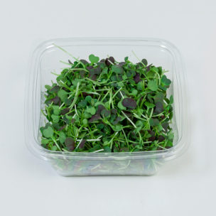 Micro Red Pakchoi » Alion » View our products at Alion