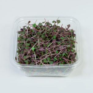 Micro Red Basil » Alion » View our products at Alion