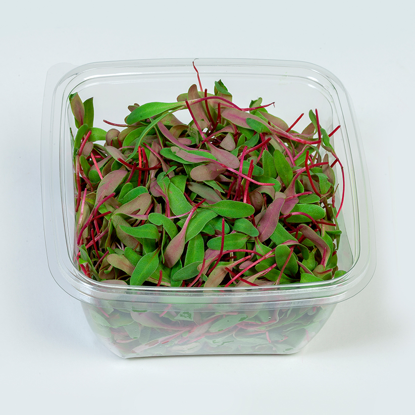 Micro Red Chard » Alion » View our products at Alion