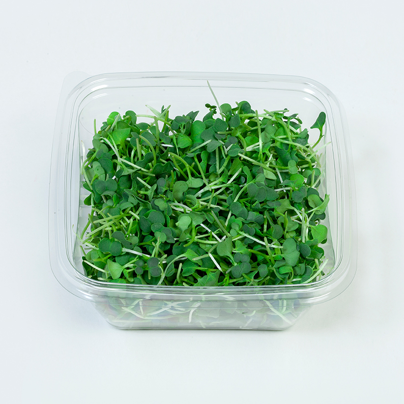 Micro Green Pakchoi » Alion » View our products at Alion