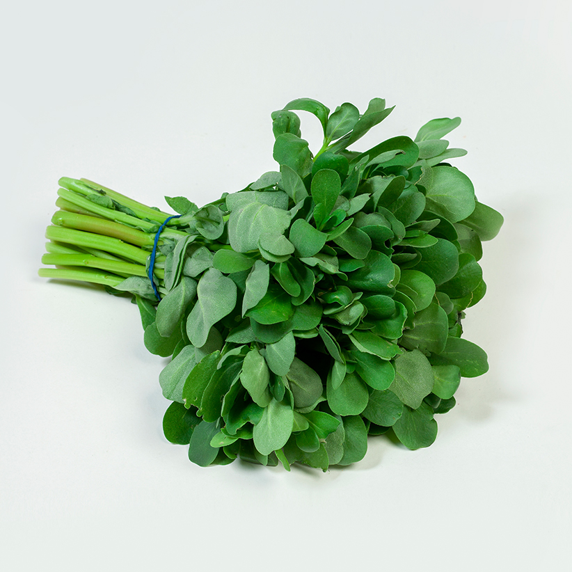 Purslane » Alion » View our products at Alion