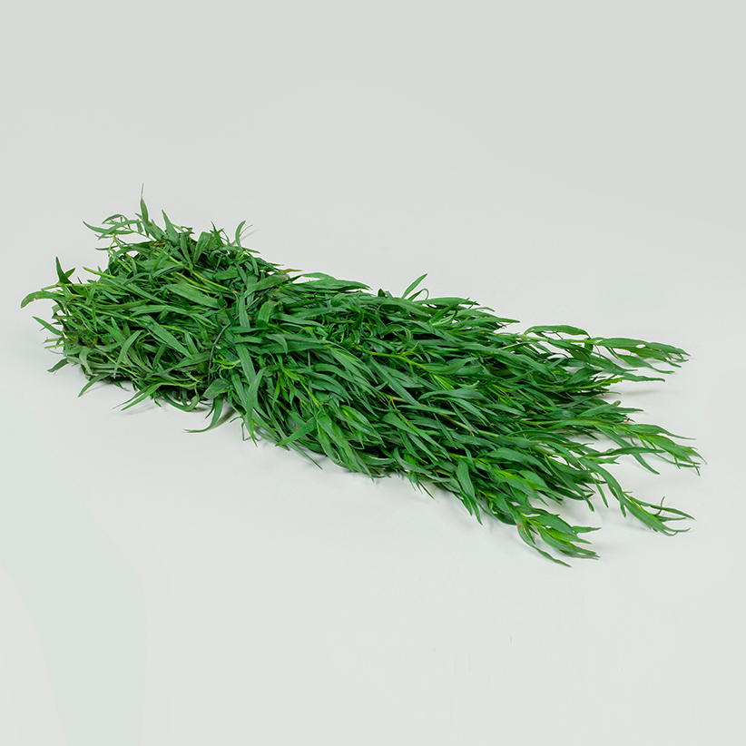 Tarragon » Alion » View our products at Alion
